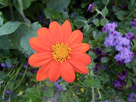 CBG Flowers 10